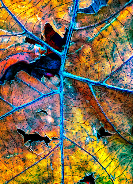 Leaf Decay|Fine Art Photography by Todd Breitling|Trees and Leaves|Todd Breitling Art