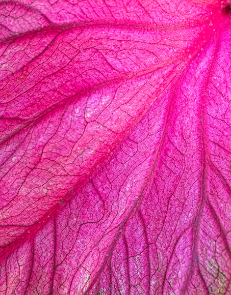 Red Leaf Arteries Fine Art Photography by Artist Todd Breitling Trees and Leaves Todd Breitling Art