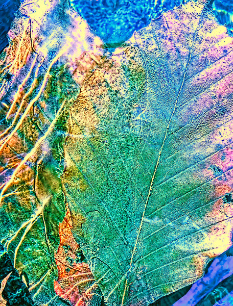 In The Moment Fine Art Photography by Todd Breitling Trees and Leaves Todd Breitling Art