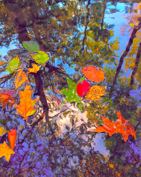 Trees and Leaves|Todd Breitling Art|Fine Art Photography exploring unique perspectives