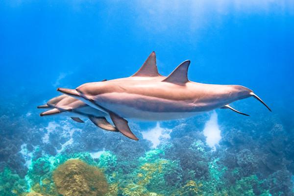 Hawaii Photography  |  Deep Blue by Shane Myers