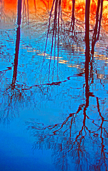 Spring Reflection Fine Art Photography by Todd Breitling Trees and Leaves Todd Breitling Art 