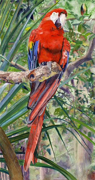 Tropical Red Scarlet Macaw Parrot Print