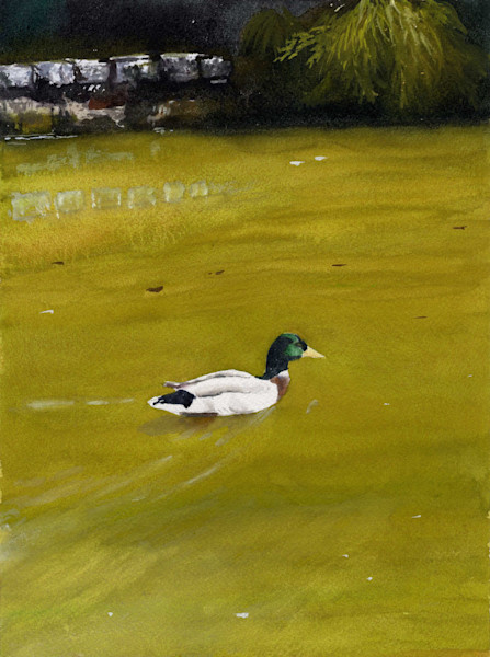 Quiet Swimming Duck in a Pond Print