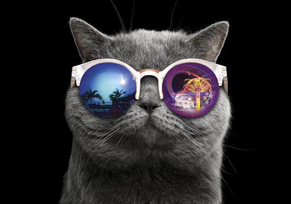 fun Cat [sunglasses]