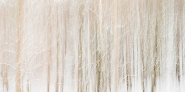 Photographs of Trees for Sale as Fine Art