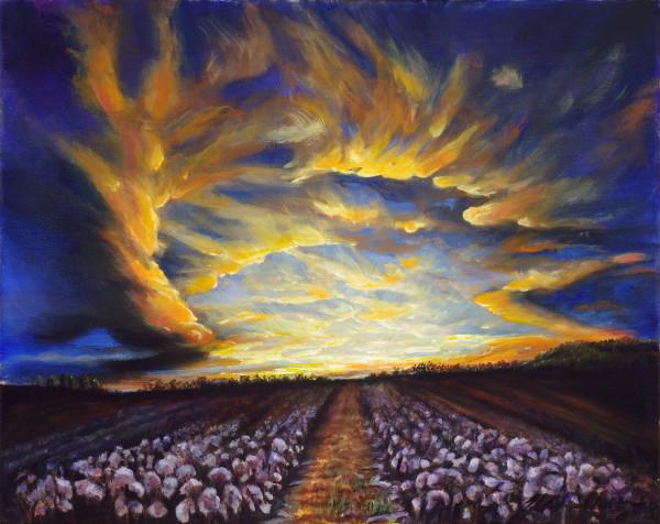 Sunrise Over Cotton