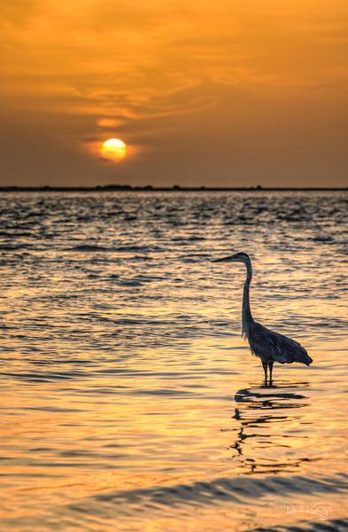 Blue Heron Sunset Photographic Art