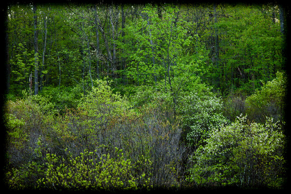 great swamp-4672