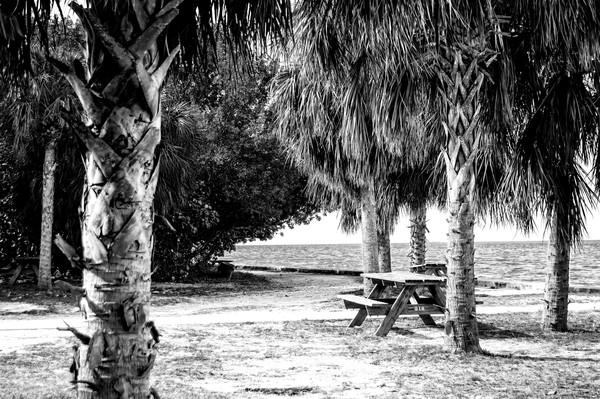 Deserted Crandon Park, Key Biscayne, BW