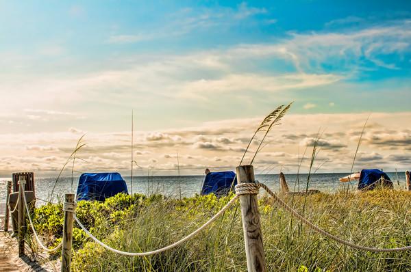 Beach Chairs and Native Island Vegetation
