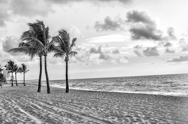 Golden Morning Sunrise on the Beach, BW