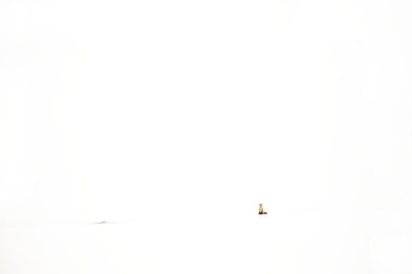 Snow Bound Harmony
