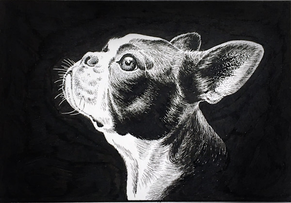 Pen Study 1 - boston terrier portrait in pen and ink
