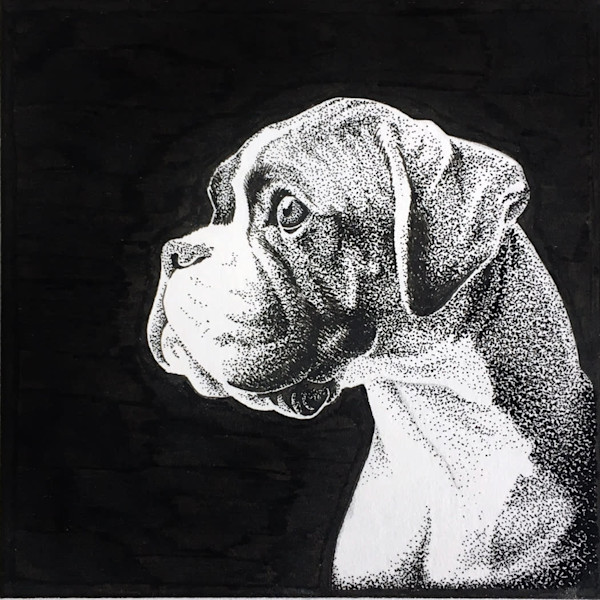 Boxer pen and ink study