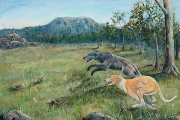 Kangaroo Dogs