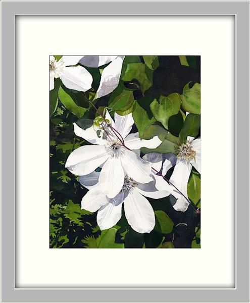 Gorgeous White Clematis Portrait Original Fine-Art