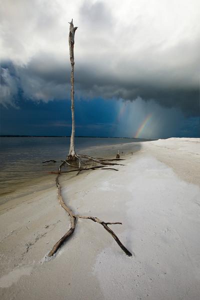 Skeleton tree and rainbow near Navarre Beach along the Emerald Coast of Florida | Fine Art Prints on Canvas, Paper, Metal, & More | Waldorff Photography