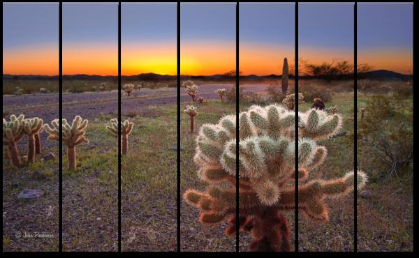 Desert Cholla Cactus