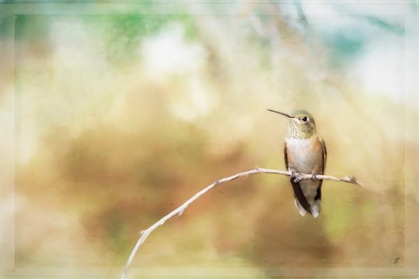 Fine Art Hummingbird six