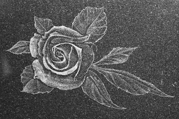 Sprawling Rose
