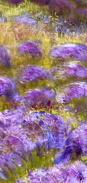 Lavender Fields X