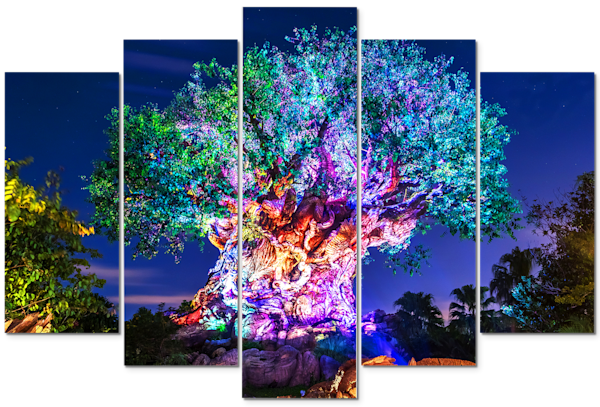 Awakenings - Disney Panel Art | William Drew Photography