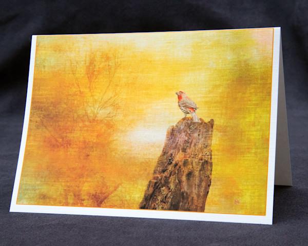 House Finch fine art card