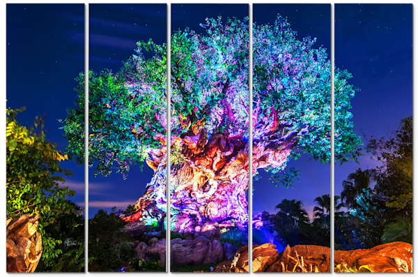 Awakenings 5 - Disney Panel Art | William Drew Photography