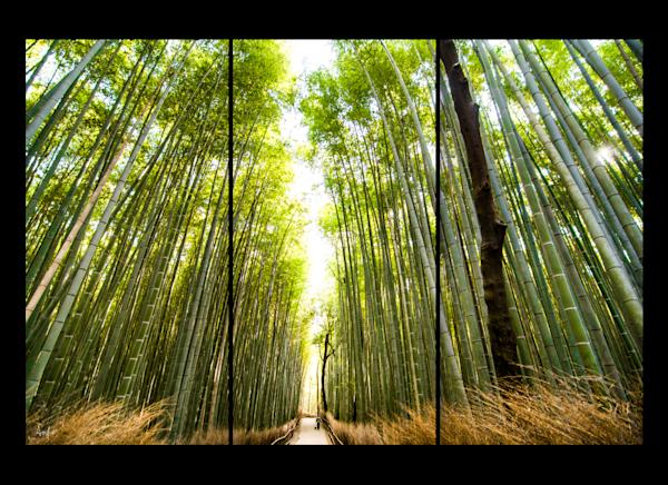 Arashiyama Bamboo Grove triptych