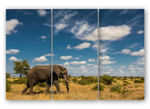 Elephant Bull with Big Sky triptych