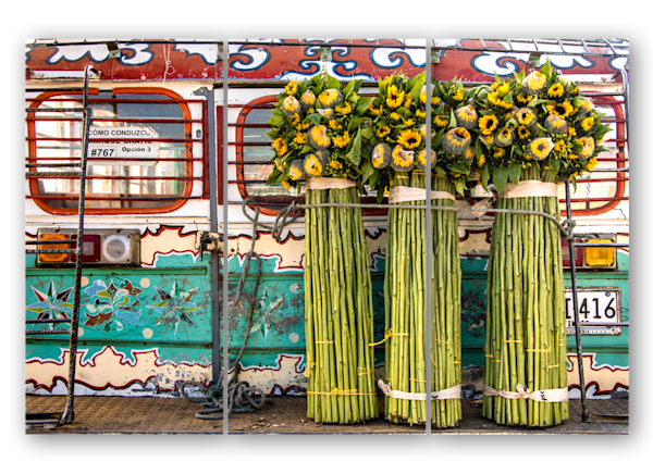 Colombian Chiva Sunflowers Triptych Photography Art | Avner Ofer Photography