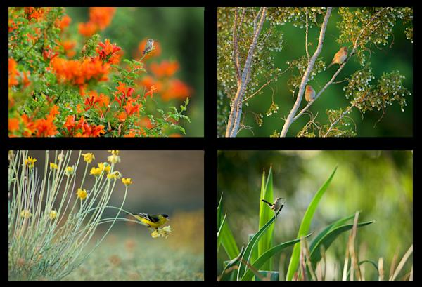 Sunnylands Flora
