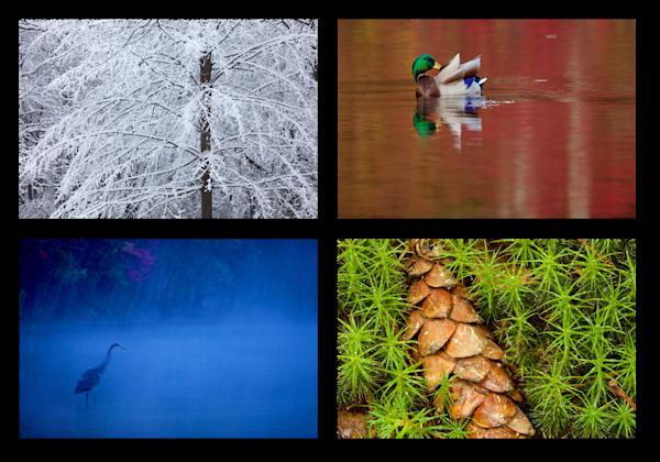 Walden Pond Color