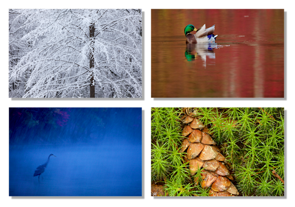 Walden Pond Color Photography Art | Tim Laman