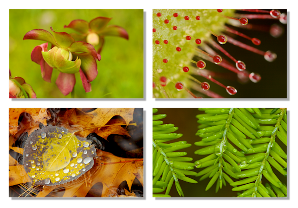 Walden Pond Flora Photography Art | Tim Laman