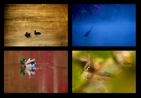 Walden Pond Birds