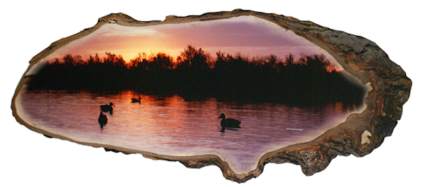 """Duck Sunset"" print form cut out by Jeff Druckrey Images."