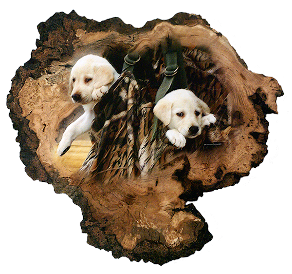 """""""Pups in A Bag"""" print form cut out by Jeff Druckrey Images."""