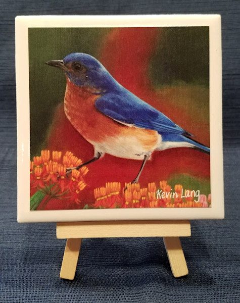 Bluebird Beauty | Kevin Lang Fine Art