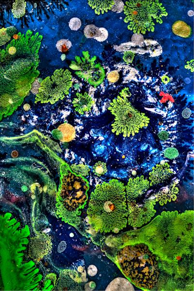 Amoeba Bay | Macroscape by Cameron Emmanuel