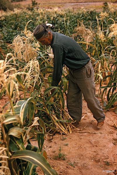 Man in Corn (UCB074)
