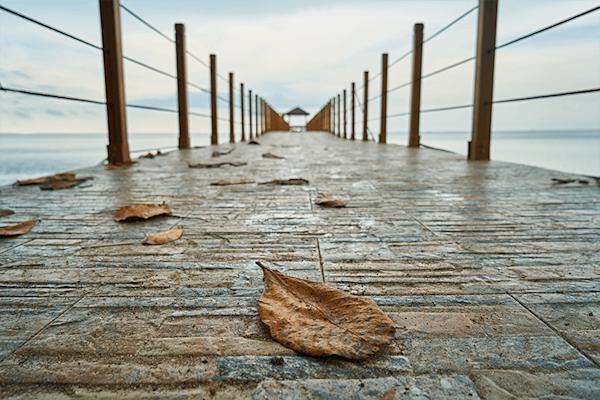 Leaves on the bridge | Koop kunstfotografie print online | A-Galleria