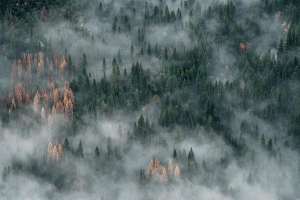 Misted forest | Koop kunstfotografie print online | A-Galleria