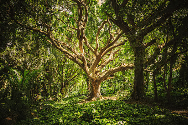 The old man of the forest | Koop kunstfotografie print online | A-Galleria