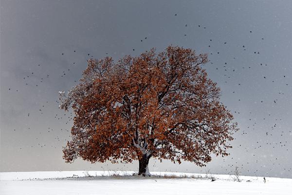 Tree of life | Koop exclusieve kunstfoto print online | A-Galleria