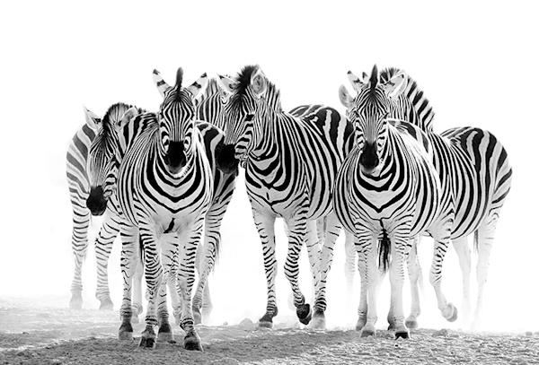 Dust stripes | Koop exclusieve kunstfoto print online | A-Galleria