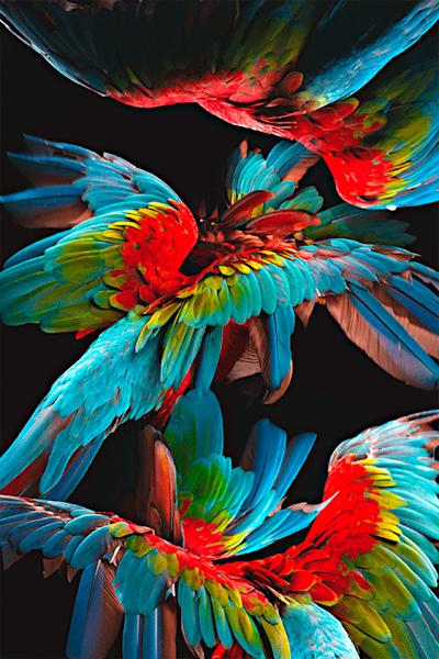 Feather dance | Koop exclusieve kunstfoto print online | A-Galleria
