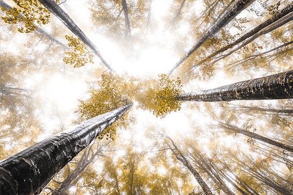 Trees and fog |  Koop exclusieve kunstfoto print online | A-Galleria