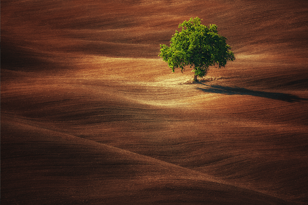 Lonely green tree | Gelimiteerde Kunst Print | A-Galleria
